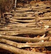 zoom in on sticks on Korean hike