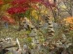 Korean Foliage 2