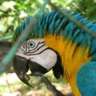 birds eye zoom in Pt. Ordaz Venezuela