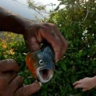 Los Llanos Animal safari pirhana fishing with Guamanchi