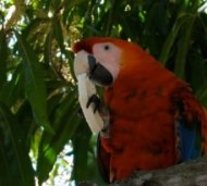 zoom bird in a tree, Venezuela
