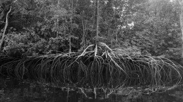 delta orinoco reflections of a tree