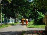 walking battambong
