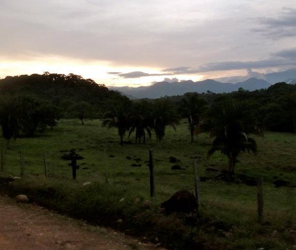 Barinas farmland. Cow population