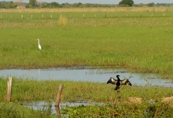 The plains in Los Llanos are covered with water for part of the year. Birds, snakes, rat like animals and crocs inhabit the plains