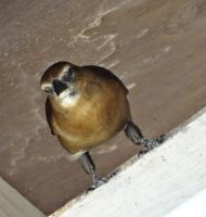 Bird in rafters on river trip