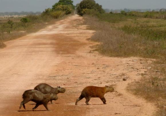 ratlike animals on the plains