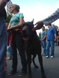 Washington, DC - GIANT DOG