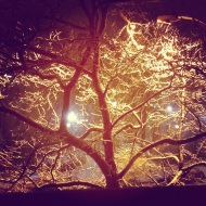my favorite tree during night with snow in back ground. Street light gives it great reflection.