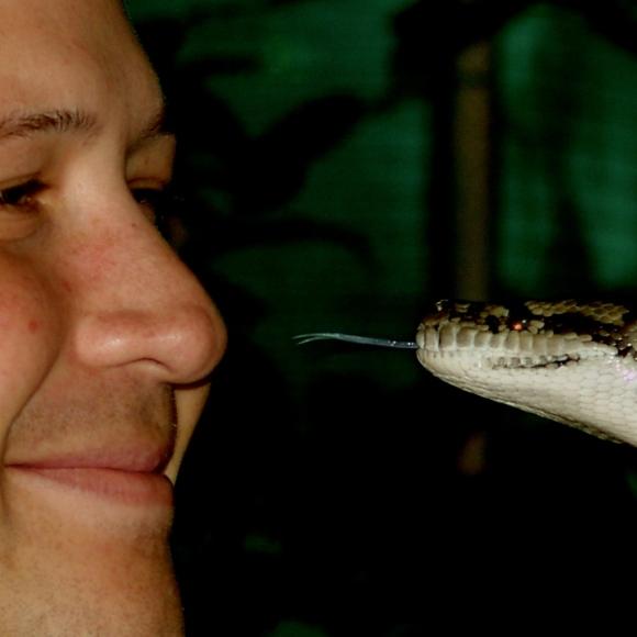 snake in the face Australia 2005