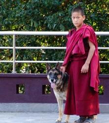 dog watcher