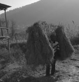 more crops