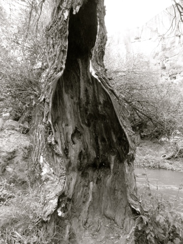 Edge of what? A tree. Turkey