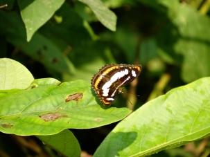 Edge of a leaf Chitwan