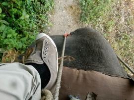 Back edge of an elephant - Chitwan